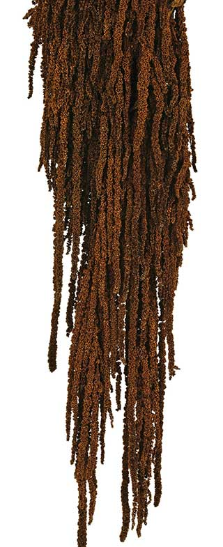 HANGING AMARANTHUS CHOCOLATE***OUT OF STOCK***