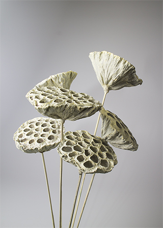Lotus Pods White-Washed Stemmed