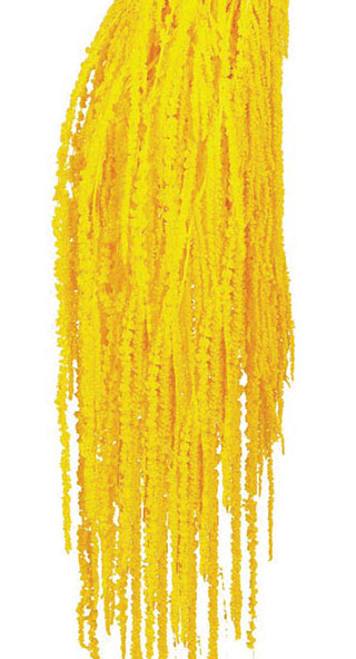 Hanging Amaranthus  Yellow ***sold Out 'til Further Notice***