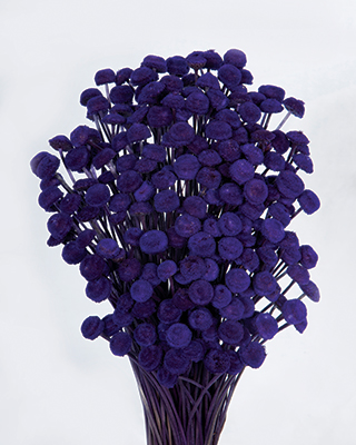 Button Flowers Purple ***sold Out 'til Late November***