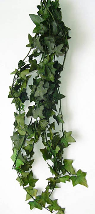 Hanging Ivy Preserved