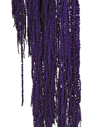 Hanging Amaranthus Purple ***out Of Stock***