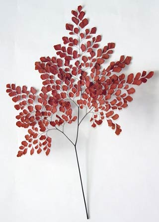 ADIANTHUM FERN RED LARGE***OUT OF STOCK***