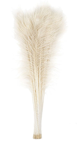 Peacock Feathers Bleached