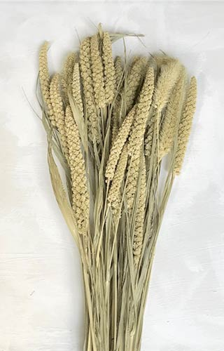 Chinese Millet Natural