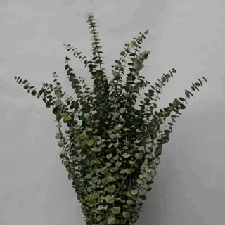 Eucalyptus Basil Spiral***sold Out 'til Further Notice Use 90601 Green***