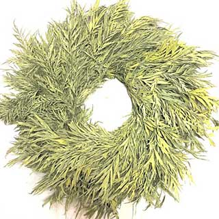 Wreaths Grevillea  Chartreuse