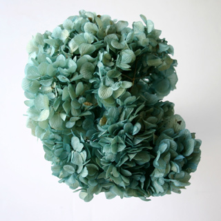 Hydrangea Supersoft  Blue