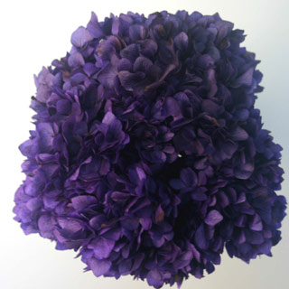 Hydrangea  Supersoft Purple