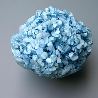 Perfection Hydrangea Lt Blue ***sold Out Til Further Notice Use Sky Blue Supersoft Item 91099***
