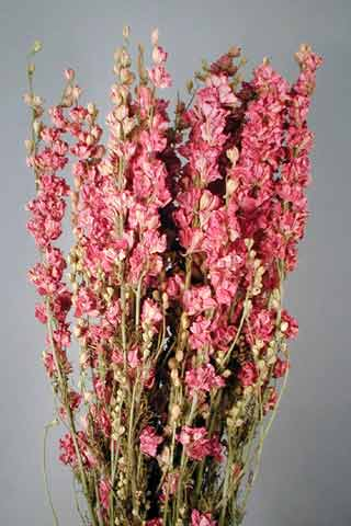 Larkspur Pink ***sold Out 'til Further Notice***