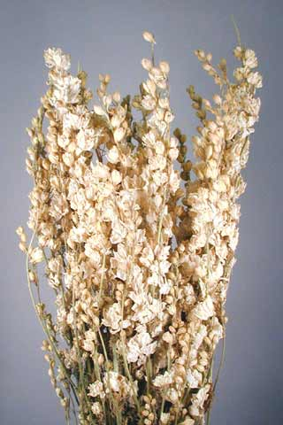 LARKSPUR WHITE ***SOLD OUT 'TIL FURTHER NOTICE***