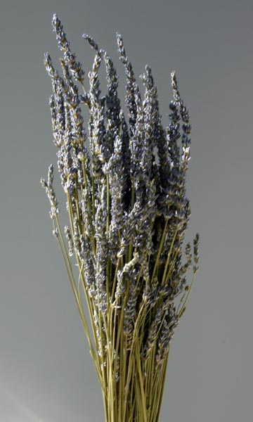 LAVENDER PROVENCE DRIED