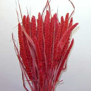 Chinese Millet Berry Red