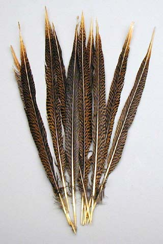 Golden Pheasant Feathers 12-15