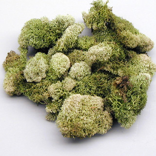 Reindeer Moss Supersoft Lt Green