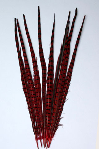 RINGNECK PHEASANT FEATHERS RED 20-22