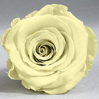 Ef Mini Roses Pale Yellow
