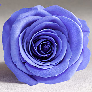 Ef Mini Roses Violet ***sold Out 'til Further Notice***