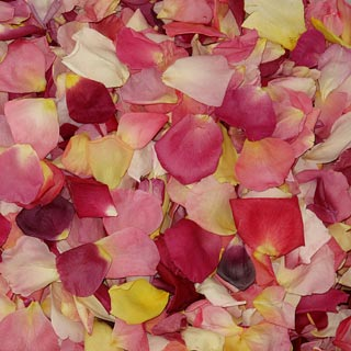 Freeze Dried Rose Petals Assorted Bright
