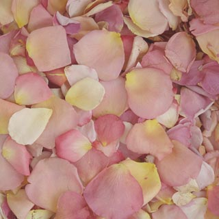 Freeze Dried Rose Petals Assorted Pastels