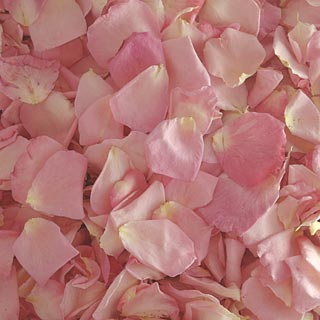 Freeze Dried Rose Petals Bridal Pink