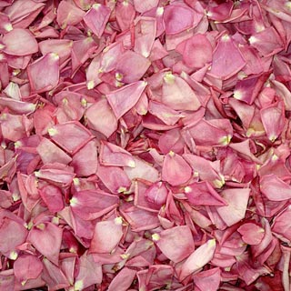 Freeze Dried Rose Petals Brite Pink