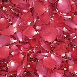 Freeze Dried Rose Petals Falling In Love