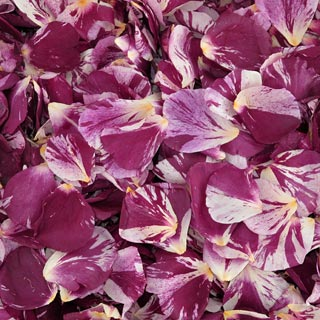 Freeze Dried Rose Petals Lucky In Love