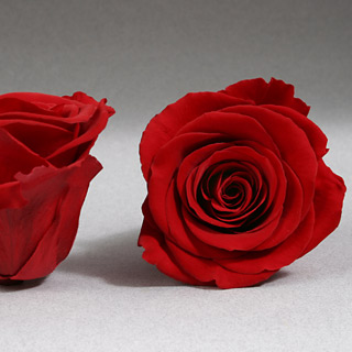"Ef Mini Roses Red ***sold Out 'til Further Notice Use 20057 1"" Red Roses***"