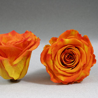Ef Mini Roses Yellow-orange ***sold Out 'til Further Notice***