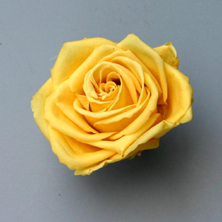 "Rosehds Pr Yellow 1""***sold Out 'til Further Notice***"