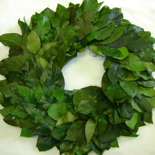 Wreath Salal Preserved 16-17""