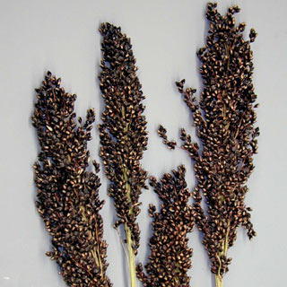 BLACK SORGHUM ***SOLD OUT 'TIL FURTHER NOTICE***