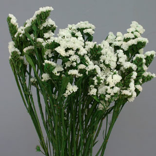 Statice Sinuata White ***out Of Stock***