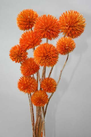 Giant Thistle Orange***sold Out 'til Further Notice***