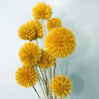 Giant Thistle Yellow ***sold Out 'til Further Notice***